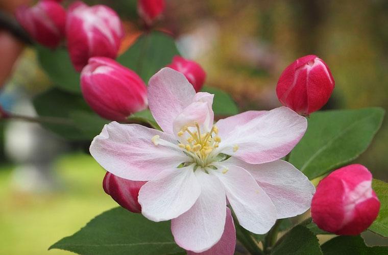 杭州商贸职业高级中学动车乘务专业