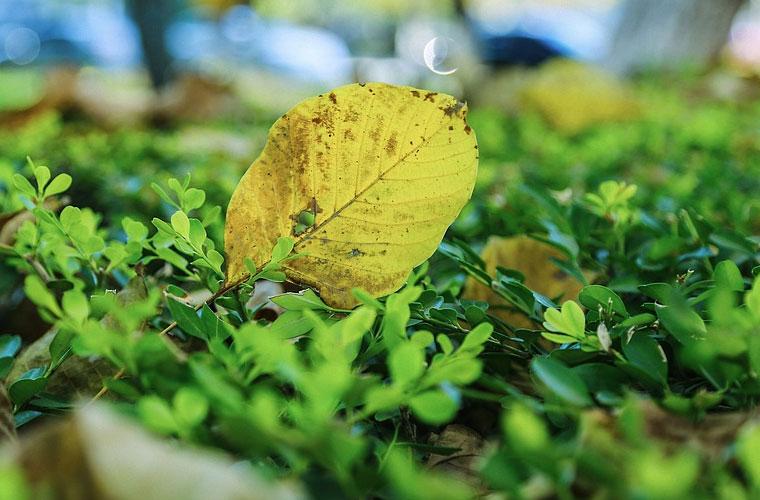 航空专业三年以后出来就业前景怎么样