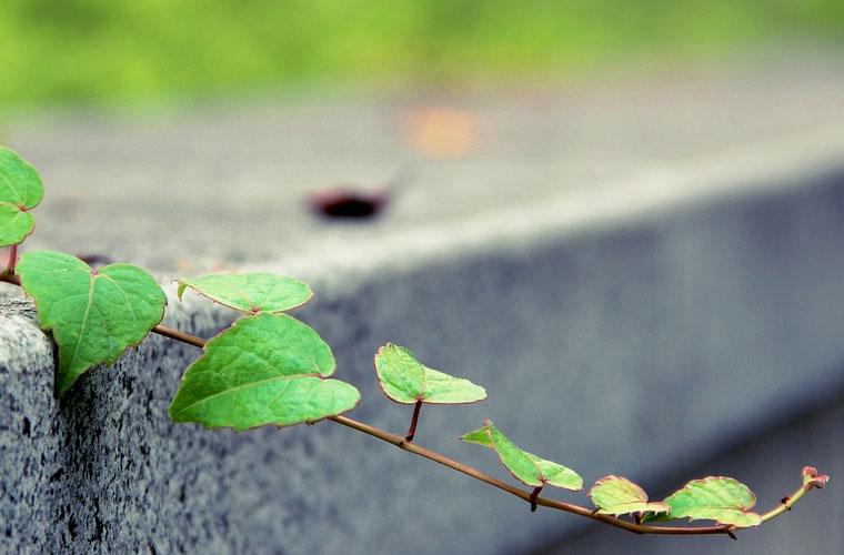 杭州商贸职业高级中学药剂专业介绍及就业前景